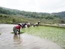 Hani Reisbauern Frauen 2