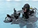 Unterwasserkameramann Mario Cyr film seit 30 Jahren in der Arktis.