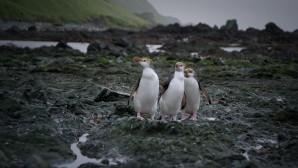 Die Neuentdeckung der Antarktis (AT)